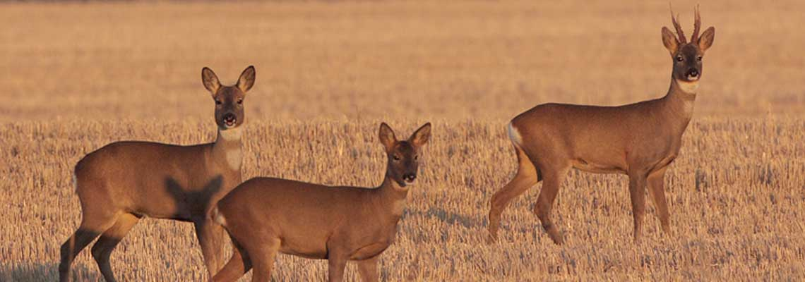 Deer Management Courses