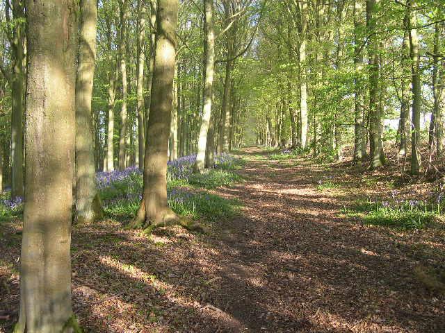 Woods on Greenlee estate